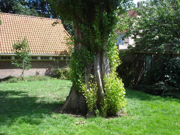 De binnentuin tussen de Veeteeltstraat en de Tuinbouwstraat in Betondorp anno 2008. Door: Pieter de Lang Alle rechten voorbehouden